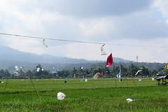 IMG_26151 (stewie.palmer) Tags: sawah ricefield indonesia sulawesi farming