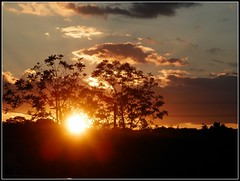 Sunset August 27, 2016 - Photo Taken by STEVEN CHATEAUNEUF (snc145) Tags: summer seasons nature photo trees silhouette sun august272016 stevenchateauneuf glow landscape scenery soe flickrunitedaward thisphotorocks