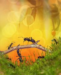 ant bridge (irina_escoffery) Tags: ants photoshop illustration