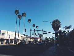 IMG_5458 (julialalexander1) Tags: palm springs california downtown desert tress