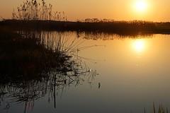 *** (pszcz9) Tags: polska poland przyroda nature parknarodowy nationalpark biebrza rzeka river zachdsoca sunset trzcina reed pejza landscape soce sun beautifulearth sony a77 wiosna spring
