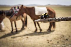 Bee-five