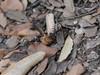 P1030890 (Dr Zoidberg) Tags: hormigas escarabajo zuiko50mmmacro
