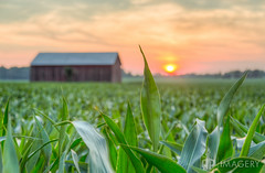 Corn Sunset (AP Imagery) Tags: sunset usa barn rural corn dof farm kentucky ky depthoffield