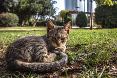 IMG_0541.JPG (esintu) Tags: animal cat feline felix 600d