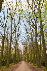 Early spring (WillemijnB) Tags: road trees nature forest spring bomen alley path pad natuur arbres bos lente printemps allee voorjaar fruhling