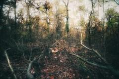 Into the woods... (hobbit68) Tags: baum sonne sunset wald bltter canon sonnenschein alt herbst wolken himmel outdoor old