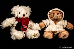 202/366 T Is For....Teddy Bears (crezzy1976) Tags: blackbackground nikon teddy harrods indoors photoaday 365 teddybears cuddlytoy day202 tisfor d3100 crezzy1976 photographybyneilcresswell 366challenge2016