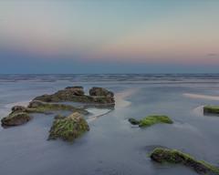 Galveston Greenery (RaulCano82) Tags: galveston galvestonisland galvestontx texas tx raulcano canon canon70d beach seawall rocks moss mossy sunset twilight summer 2016 summer2016