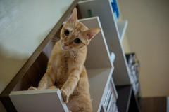 I'm gonna jump, Catch me!!! (Kantashoothailand) Tags: fujifilm xt10 xf35mmf2rwr cat neko  money meow pet moodandatmosphere
