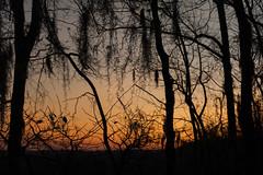 Congaree Sunrise Through Trees (Kevin VanEmburgh Photography) Tags: adventure kevinvanemburghphotography nikon photoproject travel congaree nature nationalpark nationalparkphotography nationalparkphotoproject firstlight sunrise landscapephotography landscape southcarolina swamp backwoods earlymorning outdoors outside travelphotography hiking colors orangesky
