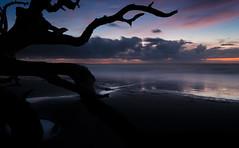Summoning Storms and Darkness (Charles Opper) Tags: boneyardbeach canon georgia jekyllisland summer summersolstice bluehour clouds coast color dark dawn driftwood landscape longexposure nature reflection seascape shadows shore storm tree twlight water boneyardjourneys
