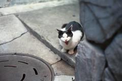 (anchor recess(lacking of Fe)) Tags:      film cat bessar3m osaka