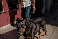 Cellebrating National Dog Day (feldmanrick) Tags: streetphotography street oakland outdoor dog unposed candid color decisivemoment urban