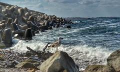 Seagull on duty (steeely85) Tags: seagull sea blacksea