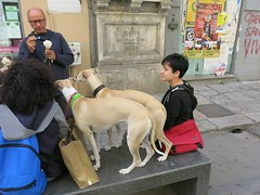 Monday Colours - Break for Ice Cream (Pushapoze) Tags: italia italy sicilia palermo sunday dogs icecream gelato cani chiens cremeglacee