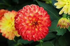 Flower (Hugo von Schreck) Tags: hugovonschreck canoneos5dsr blume flower blte macro makro tamron28300mmf3563divcpzda010 onlythebestofnature