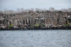 North Seymour Island (Ryan Hadley) Tags: rockface cliff palosanto trees landscape seascape nature northseymour northseymourisland islaseymournorte galapagos galapagosislands galpagos galpagosislands ecuador southamerica pacificocean nationalpark worldheritagesite