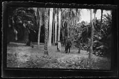 Archiv H314 Franzsischer Plantagenbesitzer, Madagaskar, 1900er (Hans-Michael Tappen) Tags: archivhansmichaeltappen plantagenbesitzer palmen franzsisch madagaskar kolonialzeit kolonie 1900er 1900s